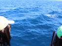 Newport Beach minke whales surfacing